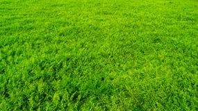 Το λιβάδι σε πράσινο στοκ εικόνες με δικαίωμα ελεύθερης χρήσης