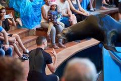 Το λιοντάρι θάλασσας παρουσιάζει στο πάρκο Loro Loro Parque Tenerife, Ισπανία στοκ φωτογραφίες με δικαίωμα ελεύθερης χρήσης
