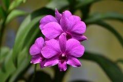 το λουλούδι ανθίζει orchid orchids & Στοκ εικόνα με δικαίωμα ελεύθερης χρήσης