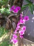 το λουλούδι ανθίζει orchid orchids & στοκ εικόνες με δικαίωμα ελεύθερης χρήσης