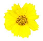 το λουλούδι απομόνωσε &kap στοκ φωτογραφία
