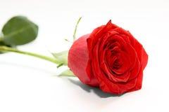 το λουλούδι αυξήθηκε Στοκ φωτογραφίες με δικαίωμα ελεύθερης χρήσης