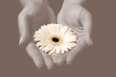 το λουλούδι δίνει κίτριν& στοκ εικόνες