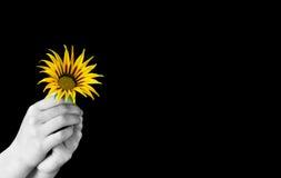 το λουλούδι δίνει Στοκ εικόνα με δικαίωμα ελεύθερης χρήσης
