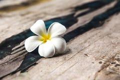 Το λουλούδι είναι στο ξύλινο υπόβαθρο σύστασης Στοκ φωτογραφίες με δικαίωμα ελεύθερης χρήσης