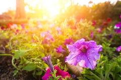 Το λουλούδι και το ηλιοβασίλεμα αυξάνονται και λίγα μεγαλώνουν Στοκ εικόνα με δικαίωμα ελεύθερης χρήσης