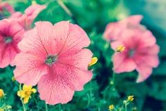 Το λουλούδι και το πράσινο υπόβαθρο φύλλων στο λουλούδι καλλιεργούν στην ηλιόλουστη ημέρα καλοκαιριού ή άνοιξης λουλούδι για τη δ Στοκ Εικόνα