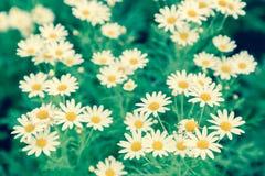 Το λουλούδι και το πράσινο υπόβαθρο φύλλων στο λουλούδι καλλιεργούν στην ηλιόλουστη ημέρα καλοκαιριού ή άνοιξης λουλούδι για τη δ Στοκ Εικόνες