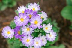 Το λουλούδι και το πράσινο υπόβαθρο φύλλων στο λουλούδι καλλιεργούν στην ηλιόλουστη ημέρα καλοκαιριού ή άνοιξης λουλούδι για τη δ Στοκ εικόνες με δικαίωμα ελεύθερης χρήσης