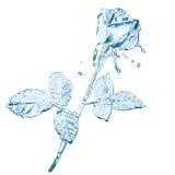το λουλούδι καταβρέχει το ύδωρ Στοκ Εικόνες