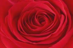 Το λουλούδι κόκκινο αυξήθηκε κοντά επάνω Στοκ φωτογραφία με δικαίωμα ελεύθερης χρήσης