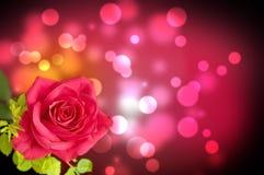 Το λουλούδι, κόκκινο αυξήθηκε Στοκ εικόνα με δικαίωμα ελεύθερης χρήσης