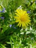 Το λουλούδι μου στοκ φωτογραφία