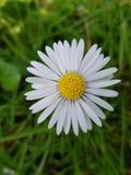 Το λουλούδι μου στοκ εικόνες