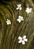 το λουλούδι μπορεί παλαιό tung δέντρων δάσος Στοκ Εικόνα