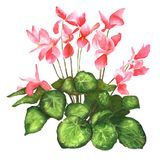 Το λουλούδι ρεαλιστικός ελεύθερη απεικόνιση δικαιώματος