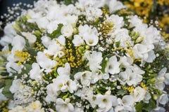 Το λουλούδι ρομαντικό αυξήθηκε λευκό Στοκ εικόνα με δικαίωμα ελεύθερης χρήσης