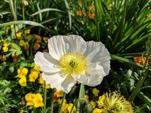 Το λουλούδι στον κήπο στοκ εικόνα με δικαίωμα ελεύθερης χρήσης