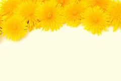 το λουλούδι συνόρων απ&omicron Στοκ φωτογραφία με δικαίωμα ελεύθερης χρήσης