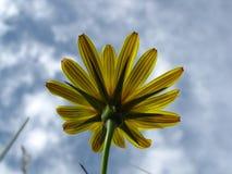 Το λουλούδι τομέων εξετάζει το νεφελώδη ουρανό Στοκ εικόνες με δικαίωμα ελεύθερης χρήσης