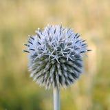 Το λουλούδι τομέων στοκ φωτογραφίες