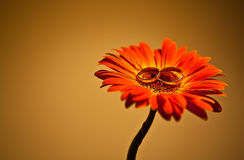 το λουλούδι χτυπά το γάμ&omic στοκ φωτογραφίες με δικαίωμα ελεύθερης χρήσης