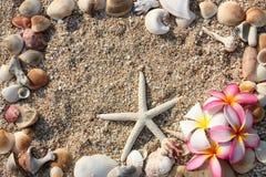το λουλούδι ψαριών αστέρι Στοκ φωτογραφία με δικαίωμα ελεύθερης χρήσης