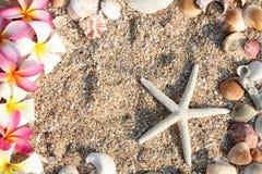 το λουλούδι ψαριών αστέρι Στοκ εικόνα με δικαίωμα ελεύθερης χρήσης