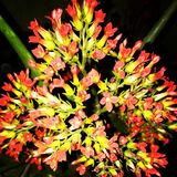 Το λουλούδι Beautyful αυτό είναι τρομερό καλό άριστο στοκ φωτογραφία με δικαίωμα ελεύθερης χρήσης
