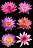 Το λουλούδι Lotus απομονώνει στοκ φωτογραφία