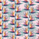 Το λουλούδι Strelitzia πουλιών του παραδείσου είναι εξωτικά λουλούδια seamles διανυσματική απεικόνιση