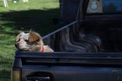 Το λυπημένο σκυλί περιμένει να βγεί Στοκ Φωτογραφίες
