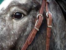το μάτι με κρατά Στοκ εικόνες με δικαίωμα ελεύθερης χρήσης