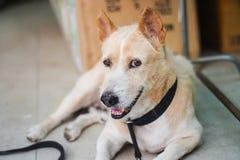 Το μάτι του σκυλιού Στοκ Εικόνα