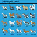 Το μέσο σκυλί αναπαράγει σκυλιών το χαριτωμένο κινούμενων σχεδίων σχέδιο κινούμενων σχεδίων σκυλιών κουταβιών σχεδίου διανυσματικ απεικόνιση αποθεμάτων