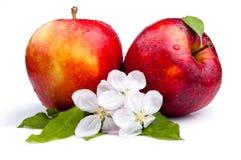 το μήλο ανθίζει το juicy κόκκινο δύο Στοκ φωτογραφία με δικαίωμα ελεύθερης χρήσης