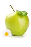το μήλο ανθίζει φρέσκο Στοκ Φωτογραφίες