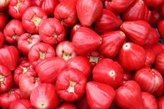 το μήλο αυξήθηκε Στοκ εικόνες με δικαίωμα ελεύθερης χρήσης