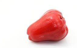 το μήλο αυξήθηκε Στοκ Εικόνα