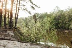 το μήλο καλύπτει το δέντρο ήλιων φύσης λιβαδιών τοπίων λουλουδιών Στοκ Φωτογραφία