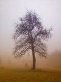 το μήλο καλύπτει το δέντρο ήλιων φύσης λιβαδιών τοπίων λουλουδιών Στοκ Εικόνα