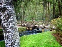 το μήλο καλύπτει το δέντρο ήλιων φύσης λιβαδιών τοπίων λουλουδιών Στοκ εικόνα με δικαίωμα ελεύθερης χρήσης