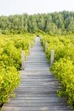 το μήλο καλύπτει το δέντρο ήλιων φύσης λιβαδιών τοπίων λουλουδιών Στοκ φωτογραφία με δικαίωμα ελεύθερης χρήσης