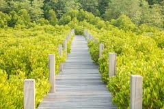 το μήλο καλύπτει το δέντρο ήλιων φύσης λιβαδιών τοπίων λουλουδιών Στοκ Φωτογραφίες