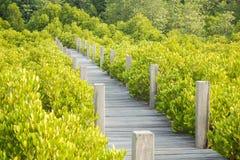 το μήλο καλύπτει το δέντρο ήλιων φύσης λιβαδιών τοπίων λουλουδιών Στοκ Εικόνες