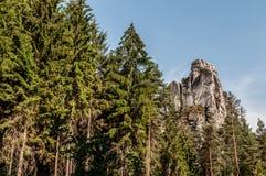 το μήλο καλύπτει το δέντρο ήλιων φύσης λιβαδιών τοπίων λουλουδιών Στοκ εικόνες με δικαίωμα ελεύθερης χρήσης