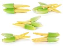 το μαγειρεύοντας καλαμπόκι μωρών έκοψε πρόσφατα έτοιμα τα συστατικά λαχανικά wok Στοκ Εικόνα