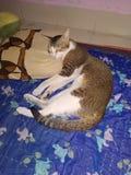 Το μαξιλάρι ολίσθησης γατών κατοικίδιων ζώων μου στο σπίτι στοκ φωτογραφία με δικαίωμα ελεύθερης χρήσης