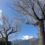 Το μαραμένο δέντρο στον κρύο αέρα στοκ εικόνα