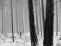 το μαύρο λευκό δέντρων Στοκ Φωτογραφία